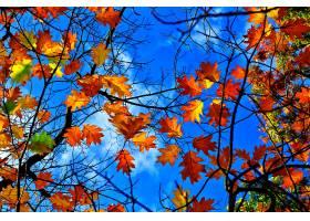 地球,叶子,树枝,秋天,叶子,壁纸,