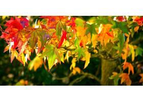 地球,叶子,树枝,秋天,叶子,阳光,壁纸,