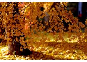 地球,叶子,树枝,秋天,树,黄色,壁纸,