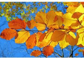地球,叶子,树枝,黄色,秋天,壁纸,