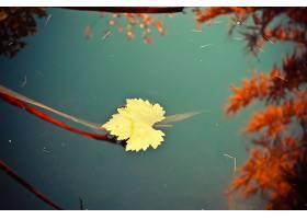 地球,叶子,水,反射,壁纸,