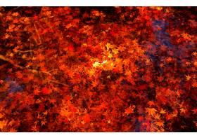 地球,叶子,水,秋天,枫树,叶子,壁纸,