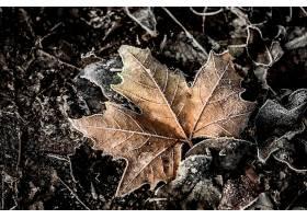 地球,叶子,冬天的,壁纸,
