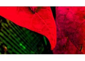 地球,叶子,壁纸,(31)