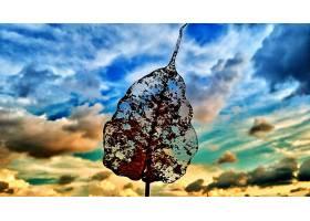 地球,叶子,天空,云,壁纸,