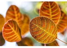 地球,叶子,巨,秋天,壁纸,
