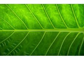 地球,叶子,巨,绿色的,壁纸,(1)