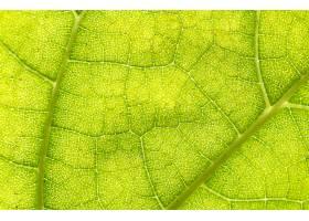 地球,叶子,巨,绿色的,壁纸,(2)