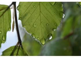 地球,叶子,巨,绿色的,水,滴,壁纸,