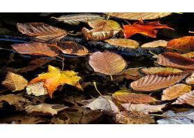 地球,叶子,水,秋天,自然,壁纸,