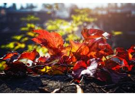 地球,叶子,秋天,Bokeh,阳光,壁纸,