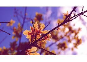地球,叶子,秋天,壁纸,(3)