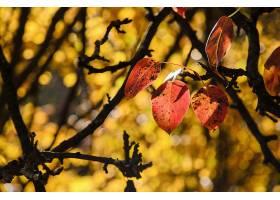 地球,叶子,秋天,自然,Bokeh,壁纸,(1)