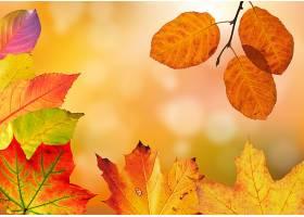 地球,叶子,秋天,自然,壁纸,(2)
