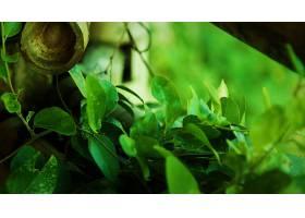地球,叶子,绿色的,植物,壁纸,(1)