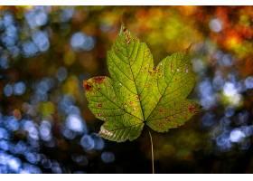 地球,叶子,自然,Bokeh,壁纸,
