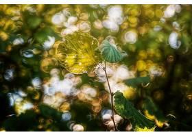 地球,叶子,自然,Bokeh,树枝,壁纸,