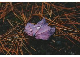 地球,叶子,自然,巨,水,滴,特写镜头,壁纸,