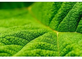 地球,叶子,自然,巨,绿色的,壁纸,(1)