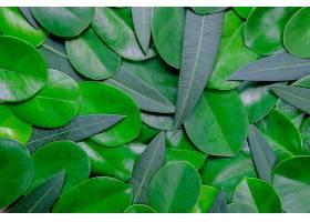 地球,叶子,自然,温室,壁纸,(1)