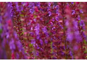 地球,花,花,自然,紫色,花,特写镜头,壁纸,