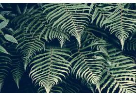地球,蕨,自然,绿色的,壁纸,