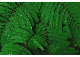 地球,蕨,露水,水,滴,绿色的,特写镜头,壁纸,