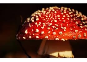 地球,蘑菇,巨,秋天,壁纸,