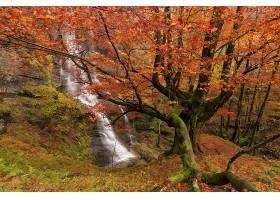 地球,瀑布,瀑布,森林,秋天,叶子,树,岩石,壁纸,(2)