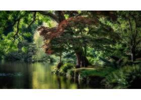 地球,树,树,河,绿色的,壁纸,