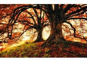 地球,树,树,秋天,叶子,橡树,壁纸,