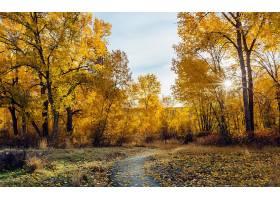 地球,小路,自然,叶子,树,秋天,壁纸,