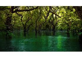 地球,湿地,森林,水,树,绿色的,壁纸,