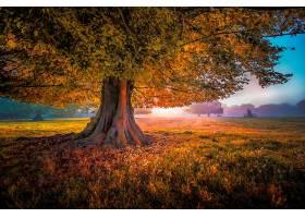 地球,树,树,领域,绿色的,壁纸,(1)