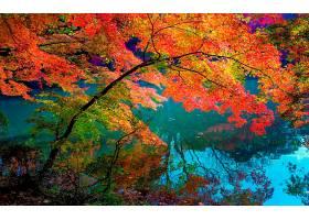地球,树枝,秋天,叶子,叶子,树,蓝色,壁纸,