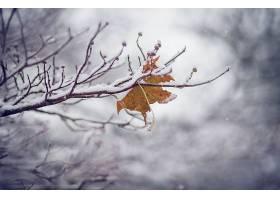 地球,冬天的,降雪,叶子,树枝,巨,壁纸,