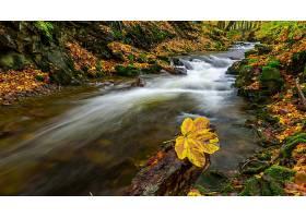 地球,河,自然,秋天,壁纸,
