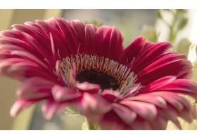 地球,大丁草,花,花,花瓣,特写镜头,壁纸,