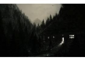 地方,森林,夜晚,灯光,风景,壁纸,
