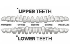 牙齿矫正牙齿修复素材