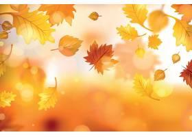 秋季落叶枫叶黄色光斑背景