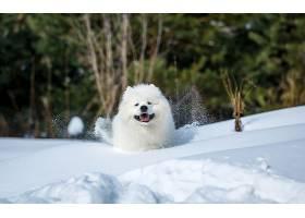 狗,狗,宠物,冬天的,雪,壁纸,