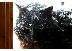 猫,猫,宠物,冬天的,雪,壁纸,