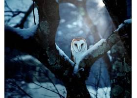 车库,猫头鹰,鸟,猫头鹰,鸟,冬天的,野生动植物,车库,猫头鹰,壁纸,