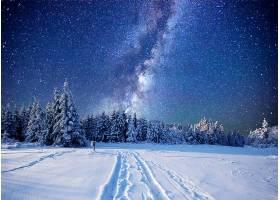 乳白色的,方法,冬天的,森林,雪,天空,明星,自然,布满星星的,天空,