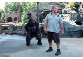 电影,动物园管理员,凯文,詹姆斯,壁纸,(1)