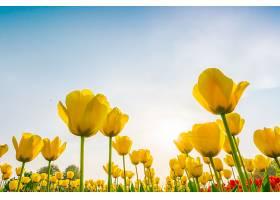 春天里美丽的郁金香花束_125451201
