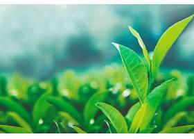 保健茶叶_441036301图片