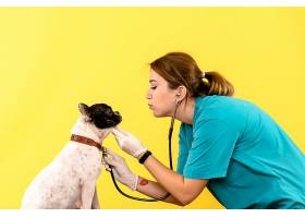 女兽医在黄色墙上观察小狗的正视图_1235035801