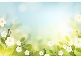 春天的花朵背景和蓝天图片